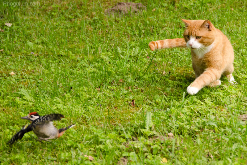 Cat vs Woodpecker vol. 3