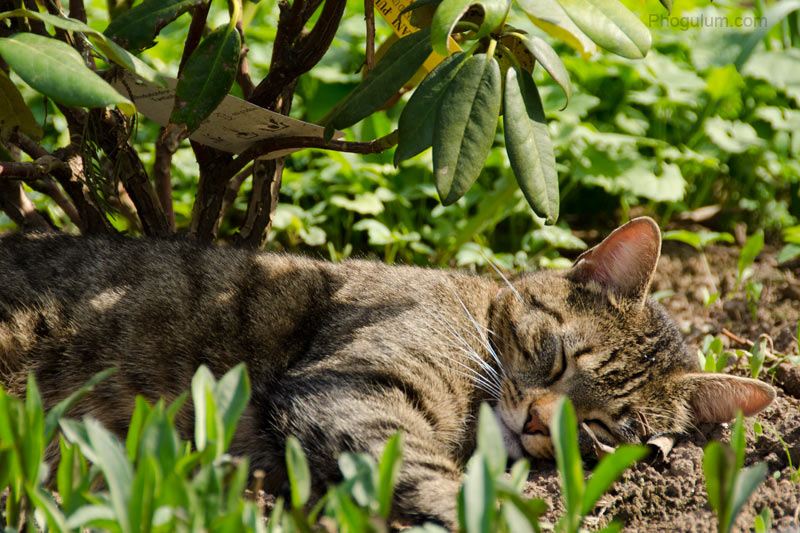 Cat Sleeping on the Flower Bed