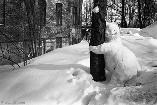 treehugger-cat-snow-winter