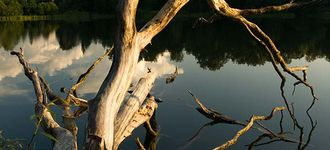 Raadi Lake and Dead Tree
