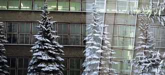 Spruces and building