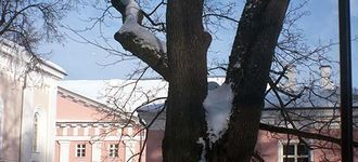 Tree Behind the University