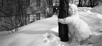 Tree Hugger Cat